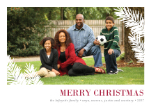 Christmas Cards - holiday pines